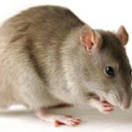 Lassa Fever Update: Red alert in states