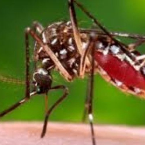 Experts call for effective mosquito control in Africa