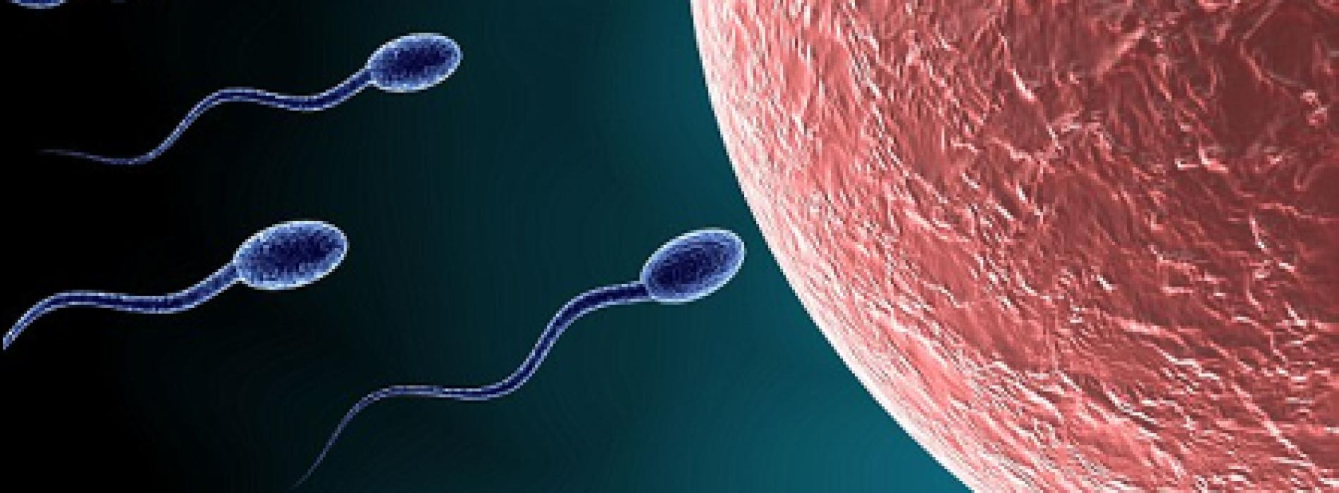 Progress on male contraceptive