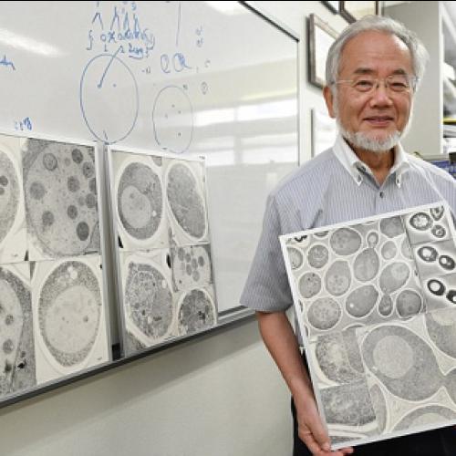Japanese researcher wins 2016 Nobel prize for medicine
