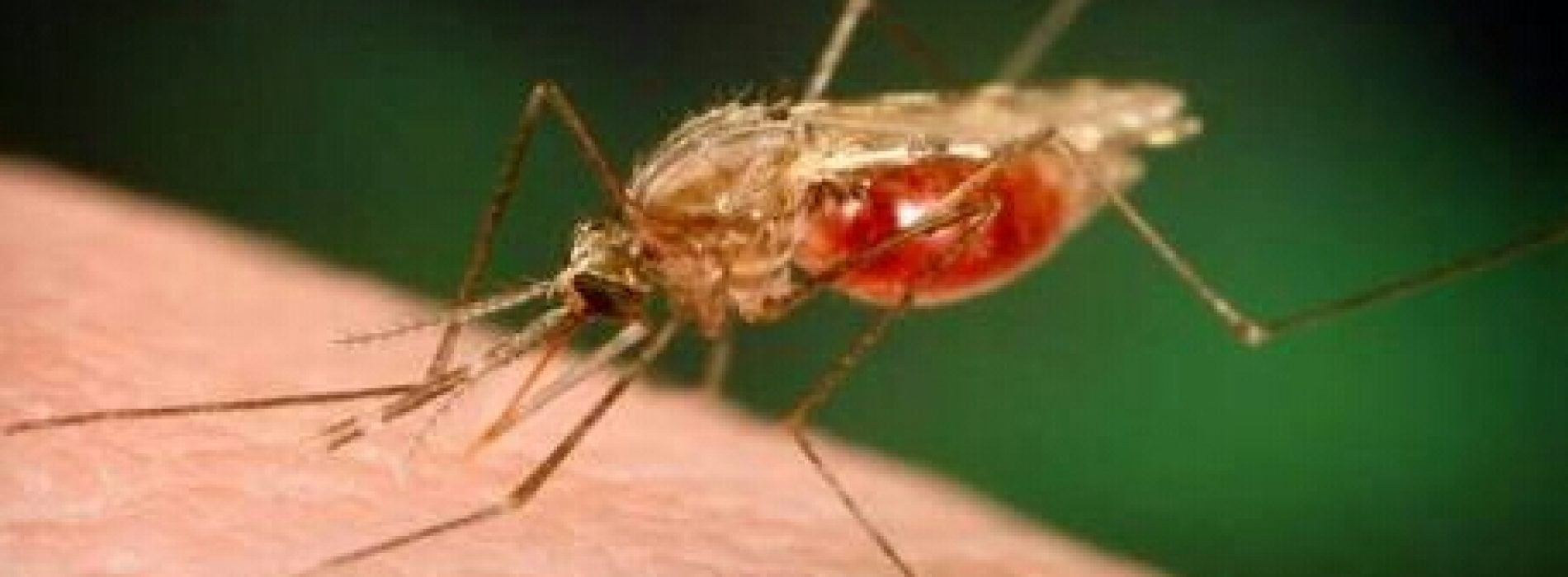 WHO certifies Paraguay malaria-free
