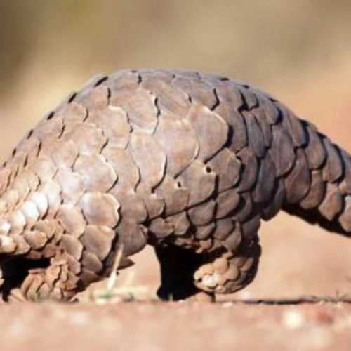 Illegal wildlife trade must stop, UNODC urges on International Mother Earth Day
